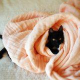 「えっ、これタオルなの!?」頭に首に、赤ちゃんに・・・ちょっと変わったタオル製品